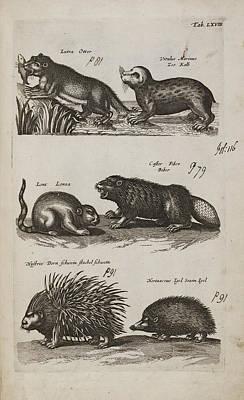 Aquatic Animals Print by British Library