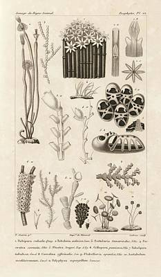 Aquatic Invertebrates Print by King's College London