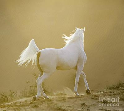 Egyptian Arabian Photograph - Arabian Desert Sunset by Carol Walker