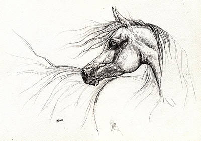 Horse Portrait Drawing - Arabian Horse Drawing 2013 09 13 by Angel  Tarantella