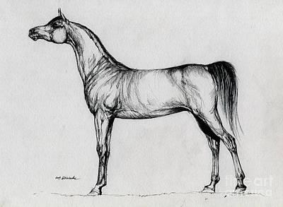 Arabian Horse Drawing 34 Print by Angel  Tarantella