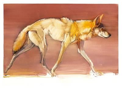 Arabian Wolf Print by Mark Adlington