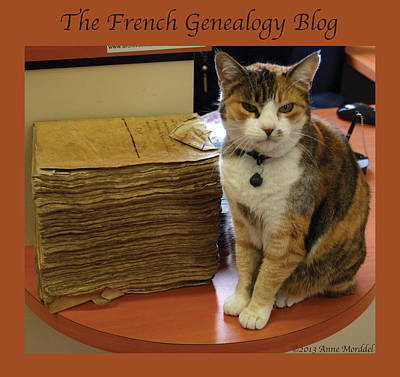 Photograph - Archives Cat With Fgb Border by A Morddel