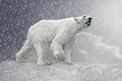 Bear Photograph - Arctic Giant by Joachim G Pinkawa
