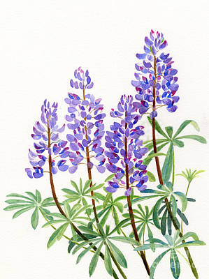 Red Flowers Painting - Arctic Lupine 2 by Sharon Freeman