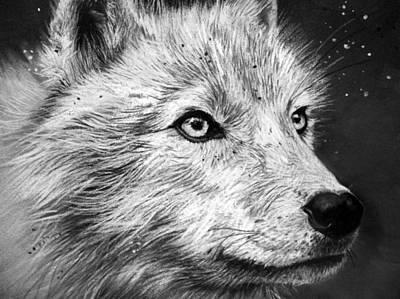 Arctic Wolf Print by Sharlena Wood
