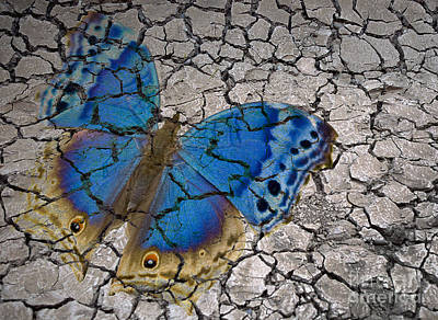 Butterfly Photograph - Arid Butterfly by Liz Leyden