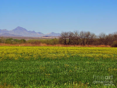 Arizona Spring Print by Methune Hively