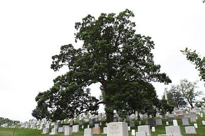 Arlington National Cemetery - 01134 Print by DC Photographer