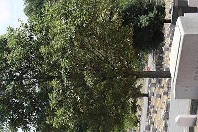Brave Photograph - Arlington National Cemetery - 121228 by DC Photographer