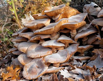 Fungal Digital Art - Armillaria Mellea by Kathleen Bishop