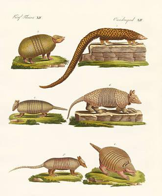Pangolin Drawing - Armoured Animals by Splendid Art Prints