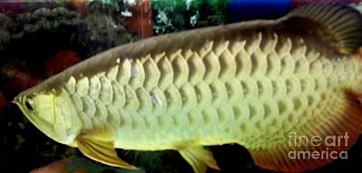 Arowana Tropical Fish 2 Print by Gail Matthews