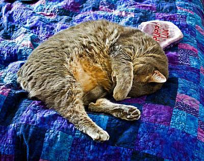Tim Buisman Photograph - Cat Nap by Tim Buisman