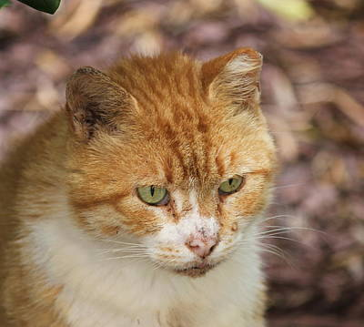 Kitty Photograph - Arthur 2  by Cathy Lindsey
