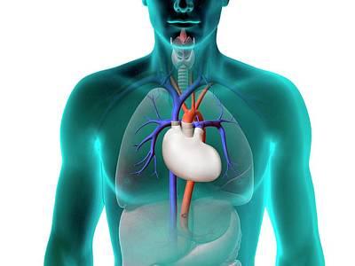 Artificial Heart Print by Claus Lunau