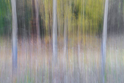 Artistic Birch Trees Print by Larry Marshall