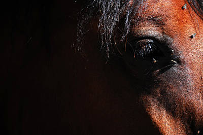 Horse Photograph - Artistic Horse by Gina Dsgn
