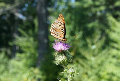 Flowers Photograph - Artistic Butterfly Stand  by Neal  Eslinger