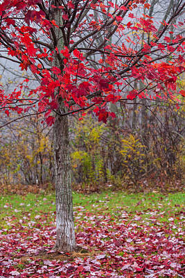Autumn Scenes Photograph - As The Red Falls by Karol Livote