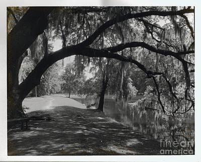Ashley River Road Charleston S. C. Print by Heinz G Mielke