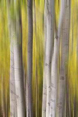 Icm Photograph - Aspen Trees In Autumn Color Portrait Dreaming View by James BO  Insogna