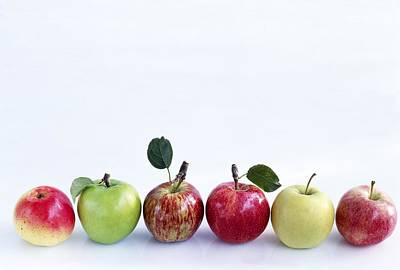 Assorted Apples Print by Science Photo Library