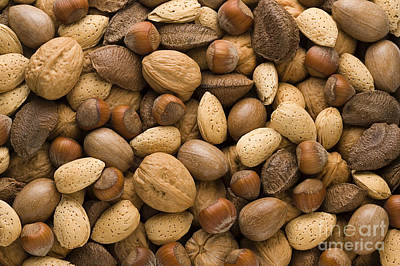 Assorted Nuts Print by Danny Smythe