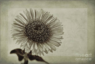 Macro Digital Art - Aster With Textures by John Edwards