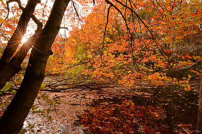 Fall Foliage Photograph - At Its Best by Lourry Legarde