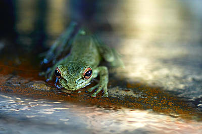 Tree Frog Photograph - At Swim One Frog by Laura Fasulo