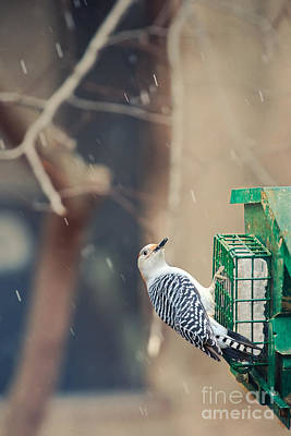 At The Feeder 2 Print by Kay Pickens