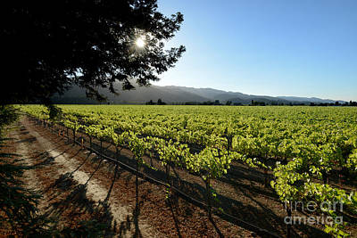 Winery Photograph - At The Vineyard by Jon Neidert