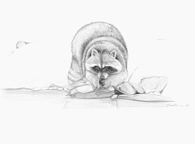 Raccoon Drawing - At The Water by Lisa Fusco