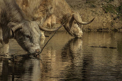 Scruffy Photograph - At The Watering Hole by Chris Fletcher