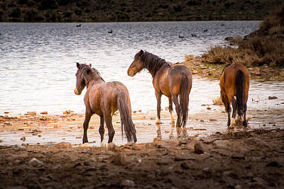 Wild Horses Photograph - At The Watering Hole by Janis Knight