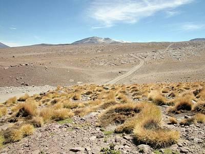 Atacama Desert Vegetation Print by European Southern Observatory