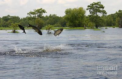 Crowley Lake Photograph - Atchafalaya Swamp Jumping Fish by D Wallace