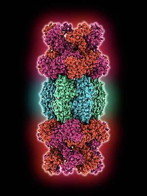 Atp Photograph - Atp-dependent Protease Molecule by Laguna Design