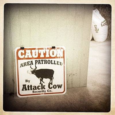 Cow Photograph - Attack Cow Security by Natasha Marco