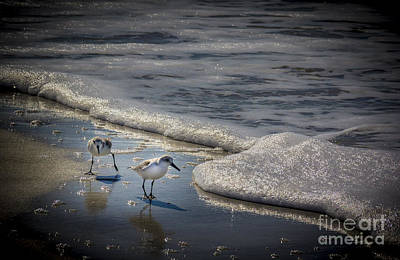 Wading Bird Photograph - Attack Of The Sea Foam by Marvin Spates