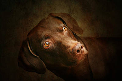 Weimaraner Photograph - Attila The King Of Dog by Heike Hultsch