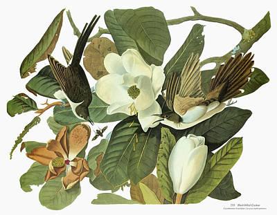 Cuckoo Painting - Audubon Cuckoo by Granger