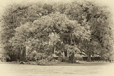 Dog Photograph - Audubon Park Sepia by Steve Harrington