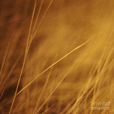 Grass Photograph - Aurum by Priska Wettstein