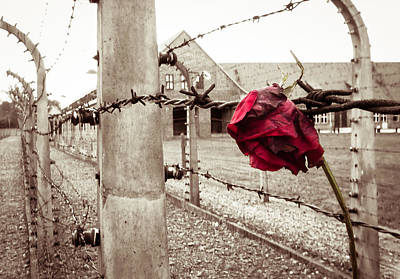 Barb-wire Photograph - Auschwitz by Ian Hufton