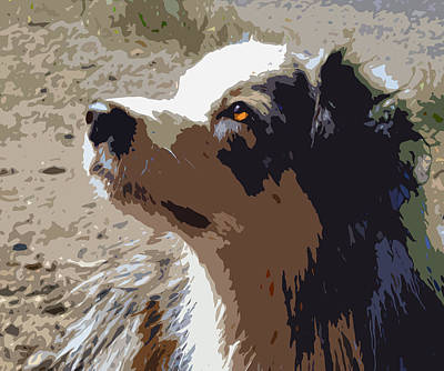 Pet Portrait Digital Art - Aussie by Nancy Merkle
