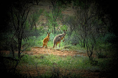 Kangaroo Photograph - Australia, New South Wales, Broken by Rona Schwarz