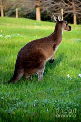 Kangaroo Digital Art - Australian Kangaroo At Sunset by Phill Petrovic