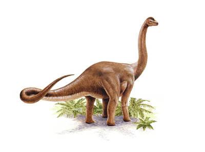 Paleozoology Photograph - Austrosaurus Dinosaur by Deagostini/uig